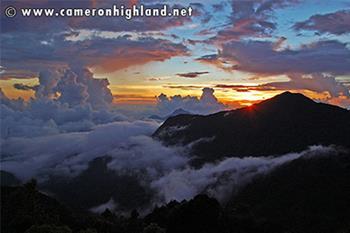gunung brinchang - cameron highlands