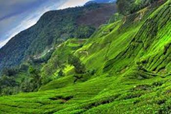 gunung irau (mount irau) - cameron highlands
