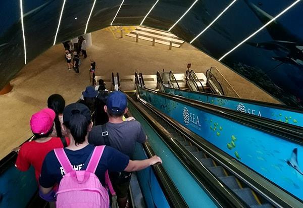 Escalator to the coach bay